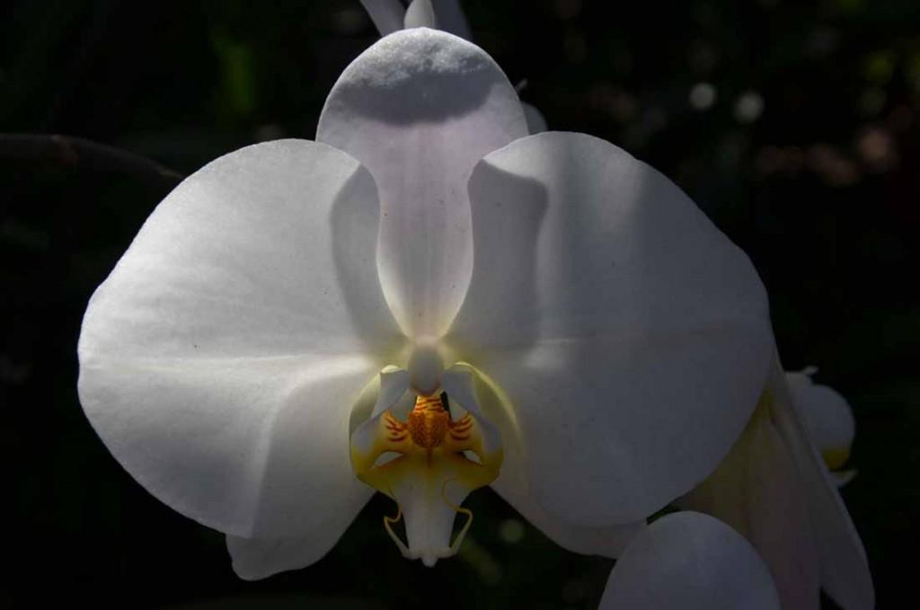 Fleur01